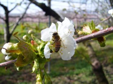 ミツバチ仕事中!